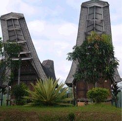 画像1: インドネシア  トラジャ スロトコ農園