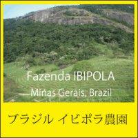 ブラジル イビポラ農園(定番)